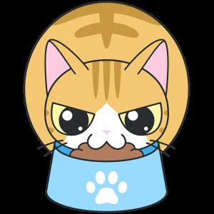 エサを食べる茶白猫