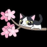 桜の木でくつろぐ白黒猫【無料イラスト・フリー素材】
