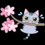 桜の木から落ちそうになるサバトラ猫【無料イラスト・フリー素材】