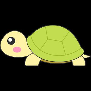 リクガメ(亀)