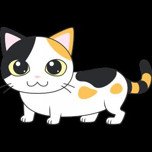 三毛マンチカン(猫)