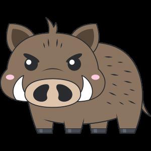 かわいいイノシシ(猪)