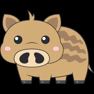 ウリ坊(猪)