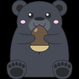 ドングリを食べるツキノワグマ(熊)