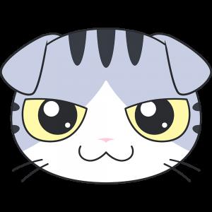 スコティッシュフォールド(サバ白猫)の顔