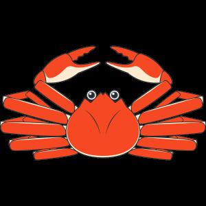 ズワイガニ(カニ・蟹)
