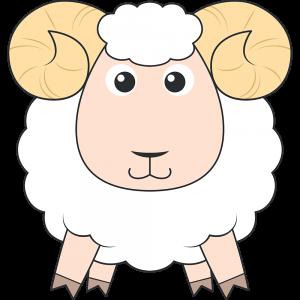 ヒツジ(メリノ-羊)