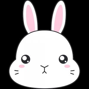 ネザーランドドワーフ(ウサギ)の顔