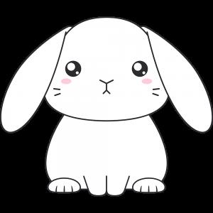 白いホーランドロップ(ウサギ)