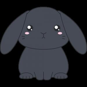 黒いホーランドロップ(ウサギ)