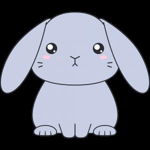 グレーのホーランドロップ(ウサギ)