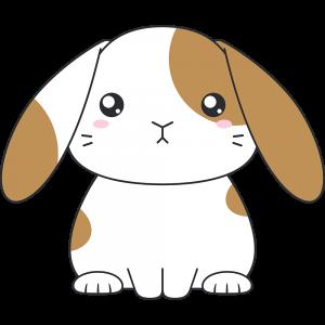 茶白のホーランドロップ(ウサギ)