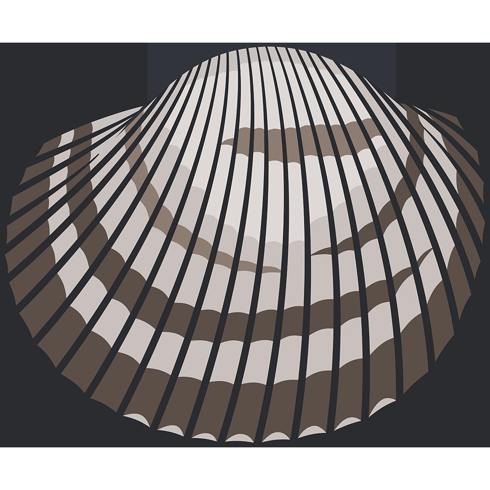 赤貝のイラスト【無料・フリー】
