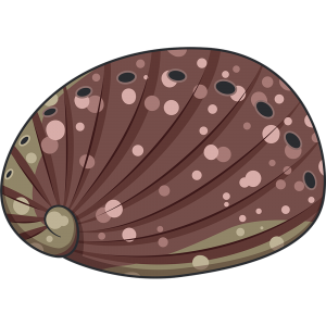 トコブシ(貝)