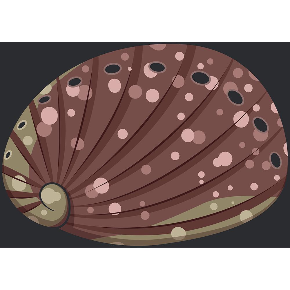 トコブシ(貝)のイラスト【無料・フリー】