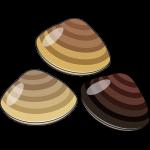 ハマグリ(貝)のイラスト【無料・フリー】