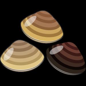 ハマグリ(貝)