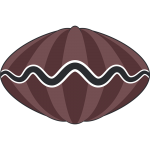 シャコ貝のイラスト【無料・フリー】