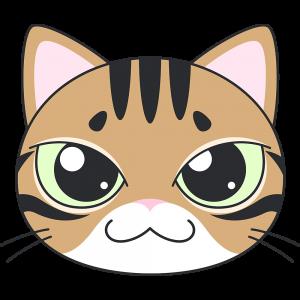 ベンガル(猫)の顔