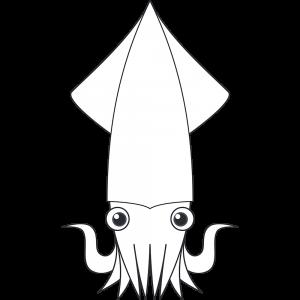 ヤリイカ(魚)