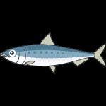 イワシ(魚)のイラスト【無料・フリー】