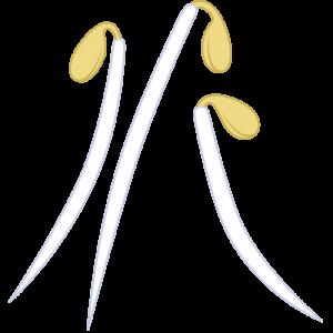 モヤシのイラスト【無料・フリー】