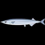 サンマ(魚)のイラスト【無料・フリー】