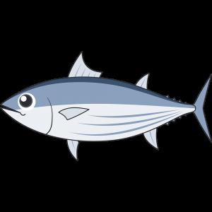 カツオ(魚)のイラスト【無料・フリー】