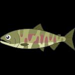 川にいるサケ(魚)のイラスト【無料・フリー】