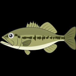 ブラックバス(魚)のイラスト【無料・フリー】