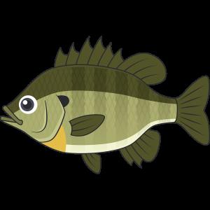 ブルーギル(魚)