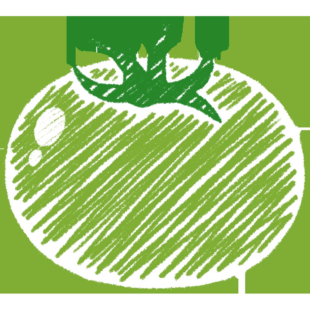 青いトマトの手書きイラスト【無料・フリー】