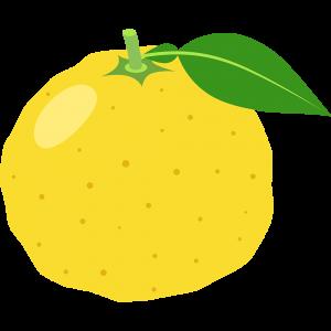 柚子のイラスト【無料・フリー】