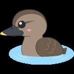 水面を泳ぐカルガモのイラスト【無料・フリー】