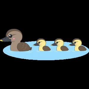 水面を泳ぐカルガモの親子