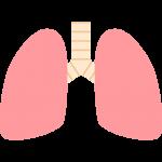肺のイラスト【無料・フリー】