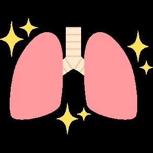 キレイな肺のイラスト【無料・フリー】