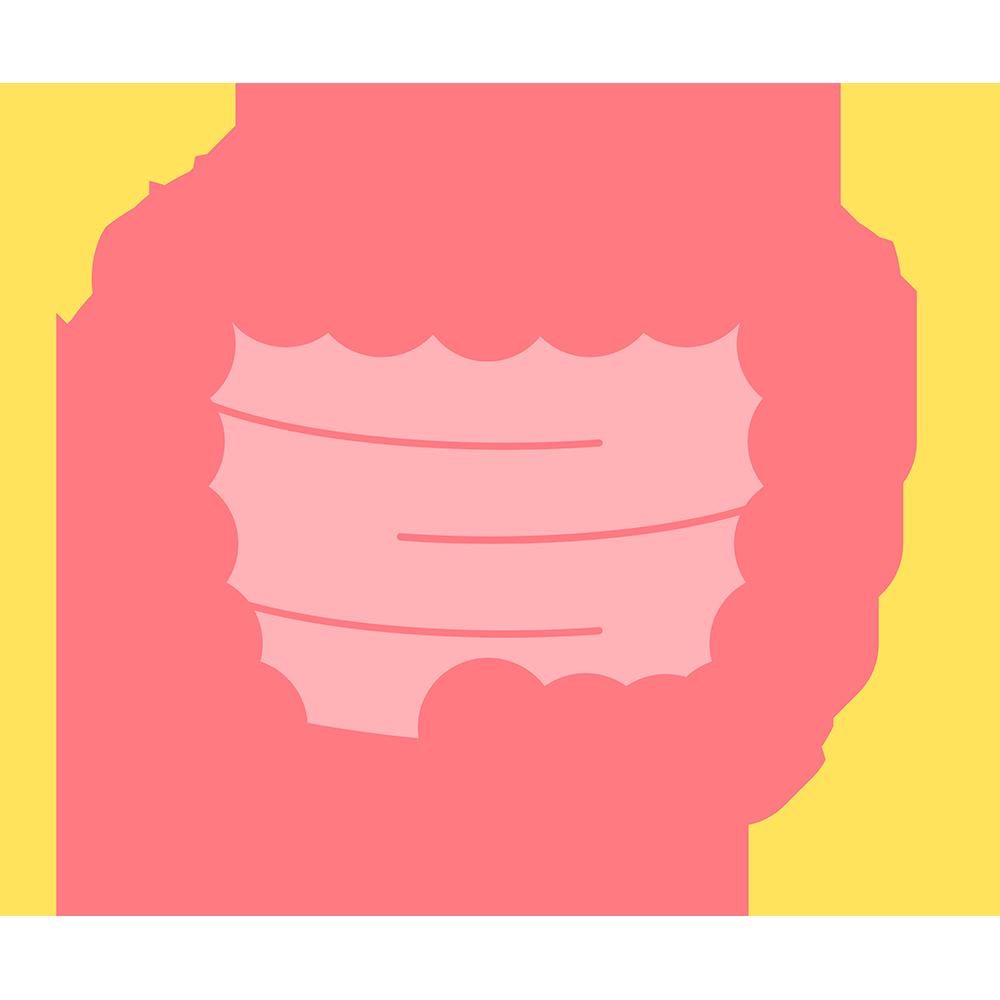 キレイな腸のイラスト【無料・フリー】