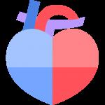 4つの部屋に分かれている心臓のイラスト【無料・フリー】