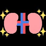 キレイな腎臓のイラスト【無料・フリー】