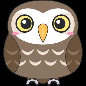 コキンメフクロウ(鳥)