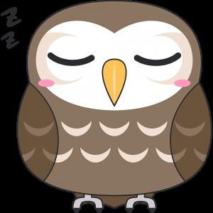 寝ているコキンメフクロウ(鳥)
