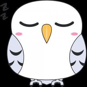寝ているシロフクロウ(鳥)