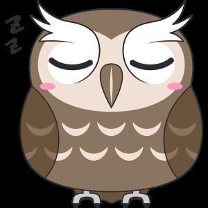 寝ているスピックスコノハズク(鳥)