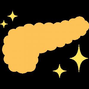 キレイな膵臓のイラスト【無料・フリー】
