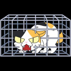 捕獲された野良猫