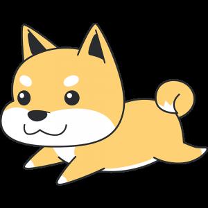 走る茶色い柴犬