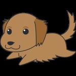 走るゴールデンレトリバー(茶色)の無料イラスト