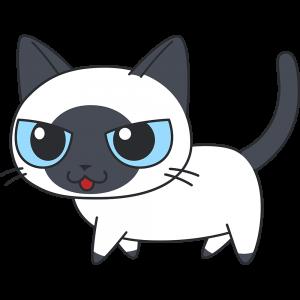 かわいいポインテッド猫