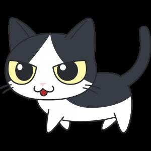 かわいい白黒猫